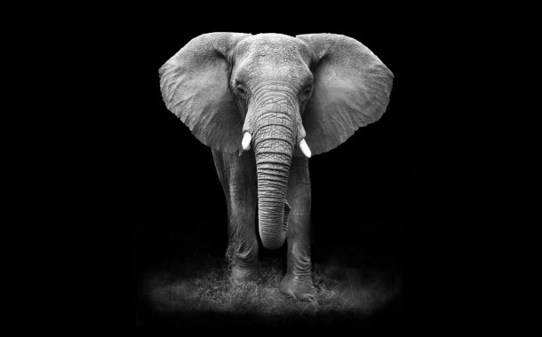 Elephant on dark